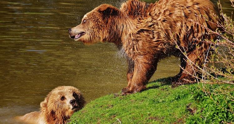 bear-1328993_1280