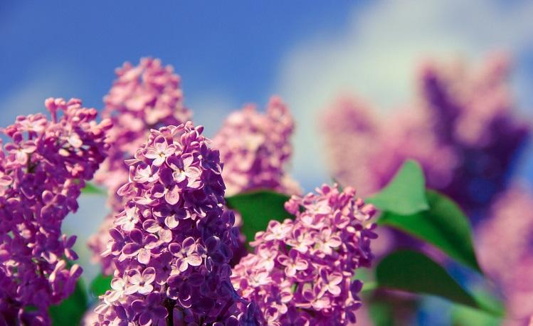 flower-1358297_1280