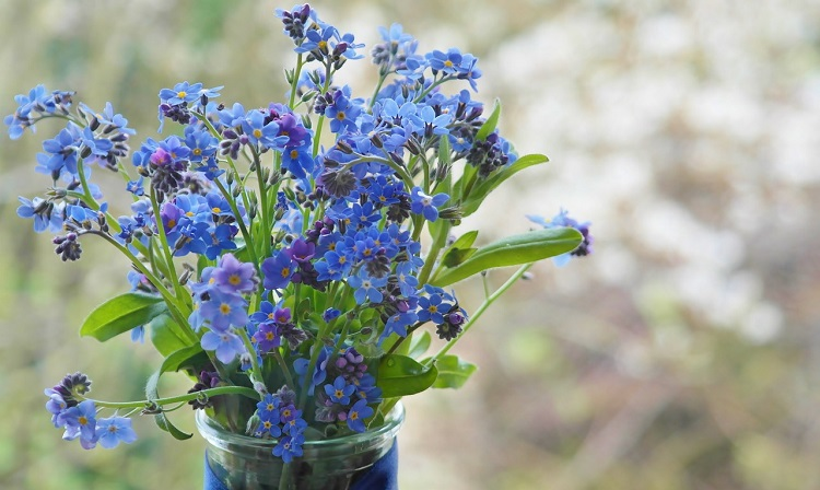 forget-me-not-1337045_1280