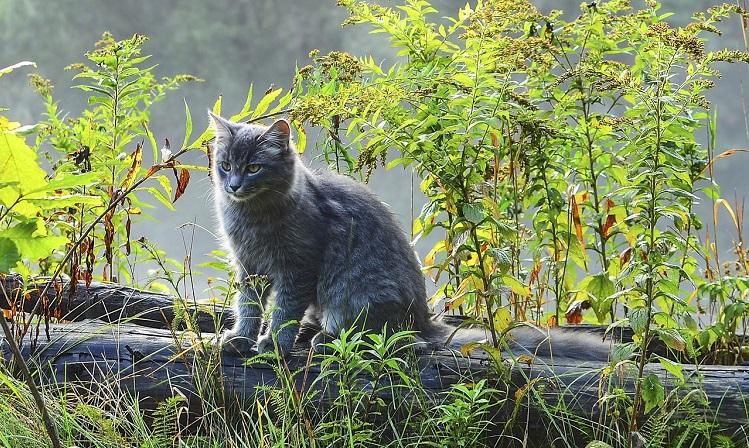 grey-cat-1346371_1280